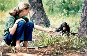 jane-goodall-afrika-schimpanse-kugelschreiber-gross