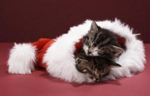 Katze-Weihnachten-Mutze-sch-151655_L